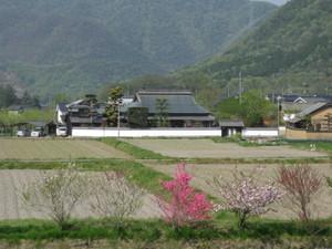 Mitani50001